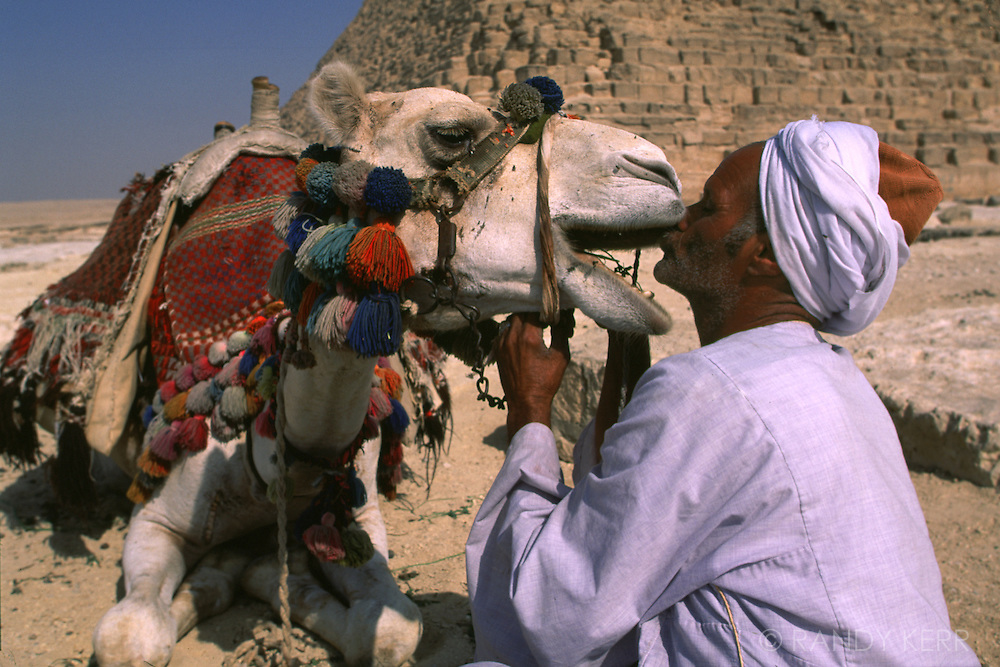 Egyptian very fond of his camel
