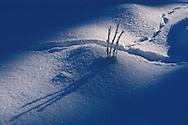 DEU, Germany, Eifel region, winter at the Dahlemer Binz....DEU, Deutschland, Eifel, Winter im Dahlemer Binz, 23.12.03 ......