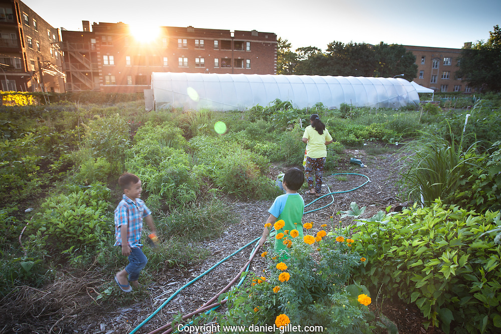 "Une centaine de familles de réfugiés du Bhoutan et de Birmanie ont transformé un terrain vacant d'Albany Park en un jardin, afin d'y produire des légumes bio issus de leur culture. Cette activité leur permet de renouer avec leurs racines agricoles, d'accéder à une nourriture de qualité, tout en créant des liens avec la communauté environnante. Une partie de leur récolte est vendue sur le marché local, le Farmer's Market d'Albany Park. // One hundred refugee families from Bhutan and Myanmar have transformed a vacant lot of Albany park into a garden, allowing them to produce organic vegetables indigenous to their countries. This activity allows them to reconnect with their agricultural roots, brings access to quality and familiar vegetables, and all the while allows them to integrate into the surrounding community. A portion of their weekly harvest is sold at the ""Farmers Market"" in Albany park."