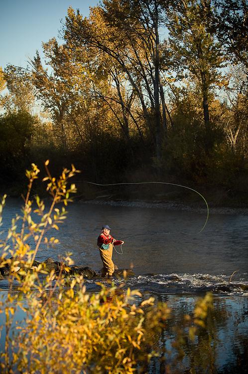 Idaho. Boise. Fiy fisherman on Boise River with fall colors. MR