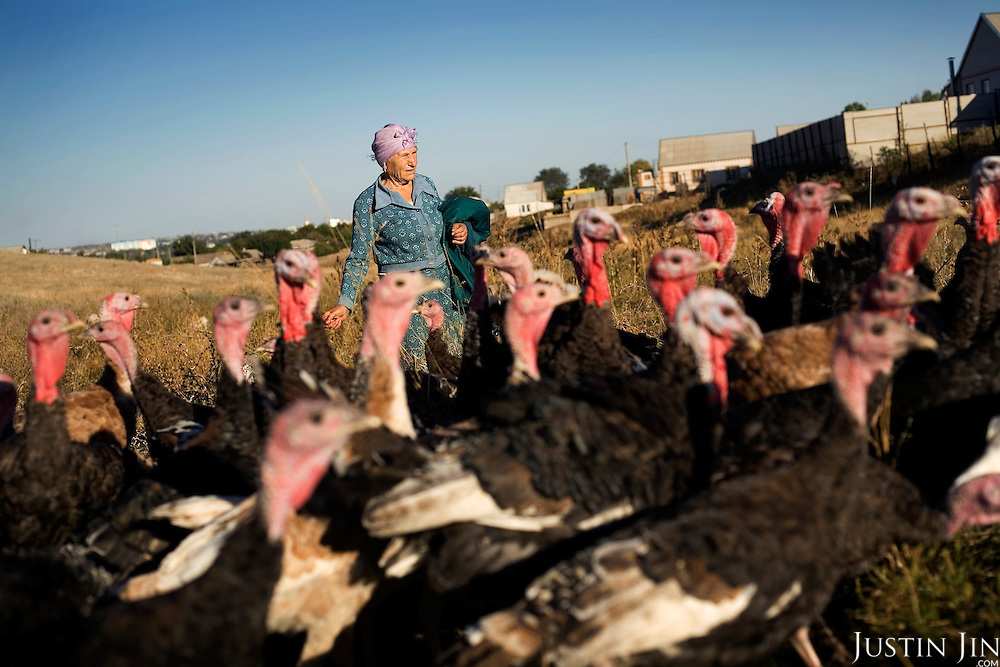 An old woman cares for her turkeys in Elista, capital of the impoverished southern Russian republic Kalmykia. ..The province is run by President Kirsan Ilyumzhinov, 44, who is a millionaire businessman and chess fanatic. He made chess compulsory in all schools. ..Ilyumzhinov, who is also the president of the World Chess Federation, Fide, is hosting one of the world?s most important matches in history. ..The match beginning September 21 in Elista, the capital of Europe?s only Buddhist nation, will end a 13-year split in the game that has produced rival claims to the title. ..Veselin Topalov, a Bulgarian ranked first according to Fide, will play against Vladimir Kramnik, who is the Classical Chess World Champion, a title established after Garry Kasparov led a breakaway from Fide in 1993. The two grandmasters, both aged 31, will face each other for the right to be undisputed world chess champion...A Buddhist millionaire businessman, Ilyumzhinov acquired his wealth in the economic free-for-all which followed the collapse of the Soviet Union. ..At the age of just over 30, he was elected president in 1993 after promising voters $100 each and a mobile phone for every shepherd. Soon after, he introduced presidential rule, concentrating power in his own hands. ..He denies persistent accusations of corruption, human rights abuses and the suppression of media freedom. When Larisa Yudina, editor of the republic's only opposition newspaper and one of his harshest critics, was murdered in 1998, he strenuously rejected allegations of involvement. ..Mr Ilyumzhinov has been president of the International Chess Federation (FIDE) since 1995 and has been enthusiastic about attracting international tournaments to Kalmykia. His extravagant Chess City has led to protests by its impoverished citizens..