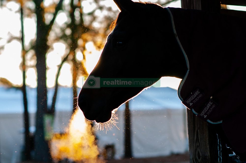 March 22, 2019 - Raeford, North Carolina, US - March 23, 2019 - Raeford, N.C., USA - CALIFORNIA D'HORSET peers out of her stall at the sixth annual Cloud 11-Gavilan North LLC Carolina International CCI and Horse Trial, at Carolina Horse Park. The Carolina International CCI and Horse Trial is one of North AmericaÃ•s premier eventing competitions for national and international eventing combinations, hosting International competition at the CCI2*-S through CCI4*-S levels and National levels of Training through Advanced. (Credit Image: © Timothy L. Hale/ZUMA Wire)