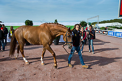 Michel George, (BEL), FBW Rainman - Horse Inspection Para Dressage - Alltech FEI World Equestrian Games™ 2014 - Normandy, France.<br />
