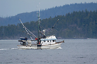 Telegraph Cove - fishing boat leaving harbour   Photo: Peter Llewellyn