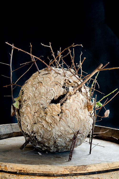 Asian hornets nest with bush twigs