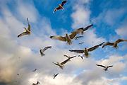 "Seagulls?like in Hitchkock's ""Birds""."