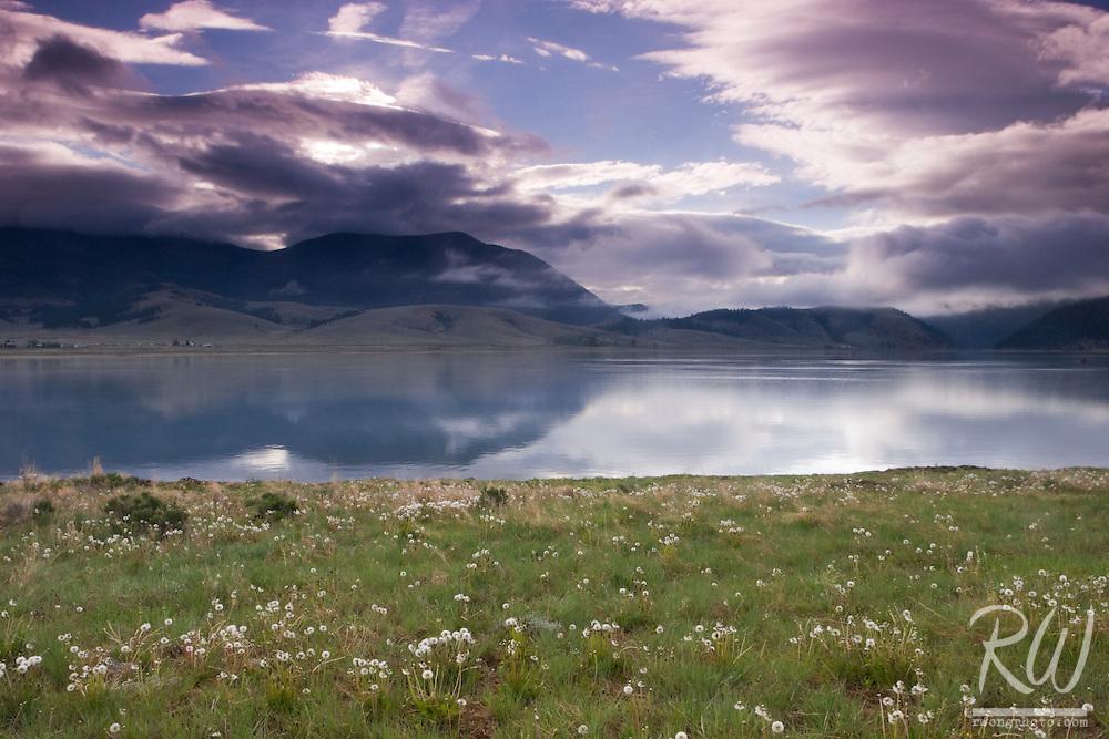 Dandelions Blooming Along Eagle Nest Lake Shoreline, New Mexico