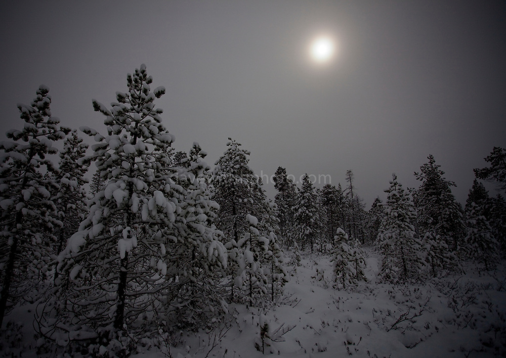 Moonlight showing through snowclouds above the taiga, December 2011.  Image made during the long hours of the polar night, in boreal forest, beside Lake Muddusjärvi, Inari, Lapland, 300km north of the Arctic Circle in Finland.