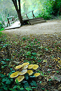 Mushrooms or toadstools growing in Krka National Park, Croatia