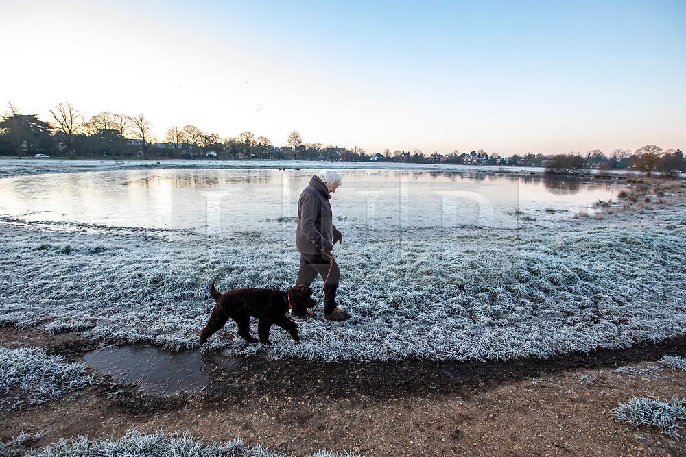 © Licensed to London News Pictures. 19/01/2020. London, UK. Dog walker enjoys a frosty start to the day in Wimbledon Common as forecasters predict below zero mornings for the week ahead. Photo credit: Alex Lentati/LNP