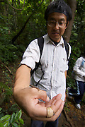 Iriomote-jima. Tourists exploring the forests along Urauchi-gawa (river). Man with tiny lizard.