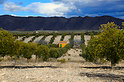 Landscape of dramatic storm clouds over olive trees, Uleila del Campo, Almeria, Spain