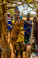 Goats being weighed at the Hamer tribe weekly market in Turmi, Omo Valley, Ethiopia.