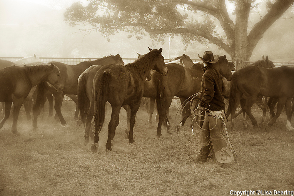 Cowboy Choosing a Horse from the Remuda, 06 Ranch, West Texas