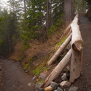 Trail to Narada Falls viewpoint - Mt. Rainier National Park, WA