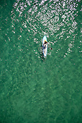 Vertical aerial view of woman paddling surfboard on clear green sea