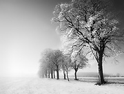 Frost-covered trees sparkle in the rising winter sun as the early morning mist clears on the island of Funen, South Denmark