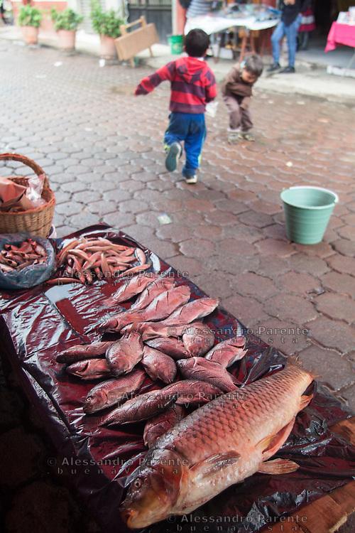 Il pesce di Cheran viene dal vicino lago di Patzcuaro. Questa zona del Messico gode di una grande bio diversita'.