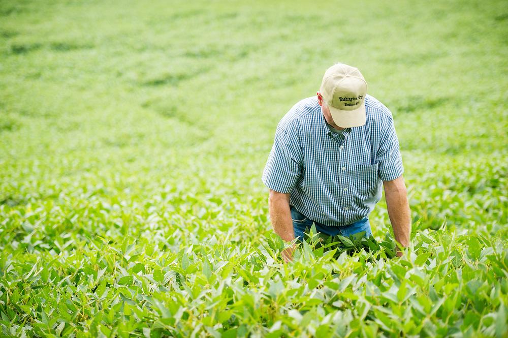 Farmer in soybean field looking down<br /> Woodbine MD