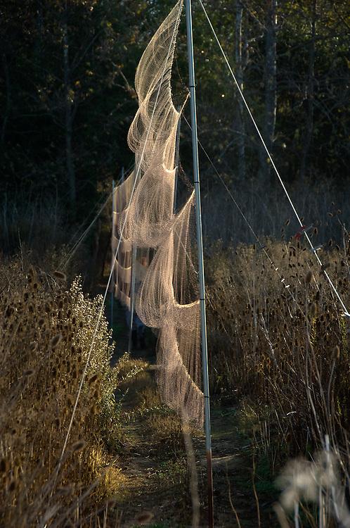 Mist Nets