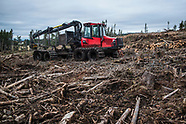 Clear Cutting, Daviot, Highlands
