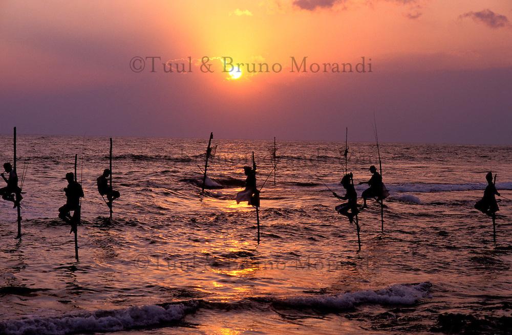 Sri Lanka - Region Sud - Weligama - Pêcheurs sur échasses