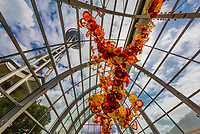 A 100 foot long sculpture (one of his longest suspended sculptures) by glass artist Dale Chihuly, in the glasshouse of the Chihuly Garden and Glass Museum, Seattle Center, Seattle, Washington USA.