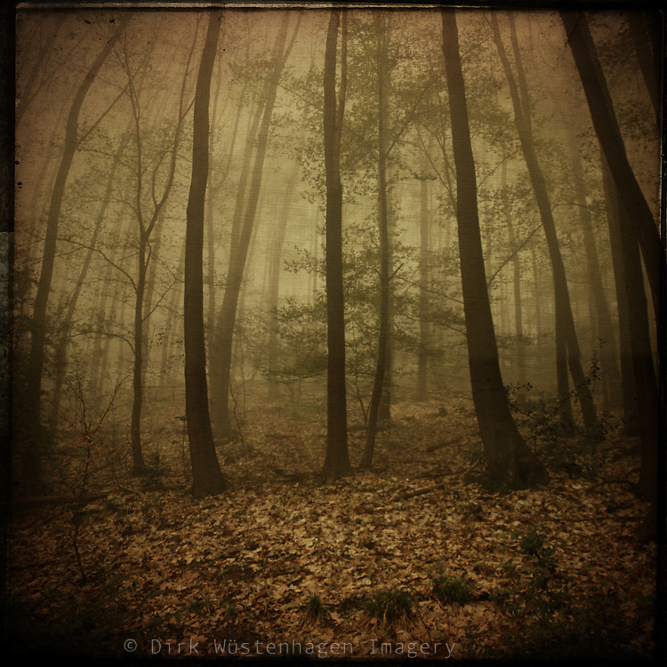 forest shrouded in mist