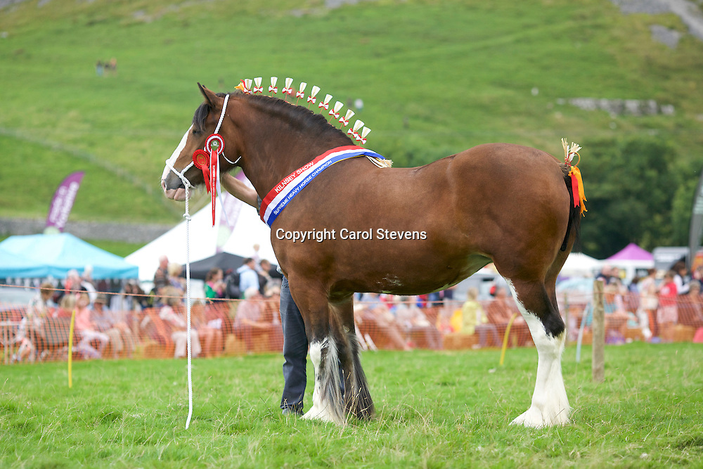 Robert Bedford showing Richard Bedford's Hartcliff Rihanna<br />