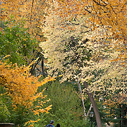 Peak foliage in Central Park, New York City