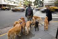 Dog walker in Buenos Aires, Argentina
