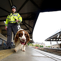 Fighting Serious and Organised Crime in Tayside.....21.09.10<br /> Tayside Police joined forces with British Transport Police to crack down on drug trafficking in the Tayside area. Officers from Tayside's drug branch joined specialist dog handlers to search travellers at perth railway station...  Pictured Tayside Police Officer Ryan Galloway with his drugs dog 'Buddy' on one of the platforms<br /> Picture by Graeme Hart.<br /> Copyright Perthshire Picture Agency<br /> Tel: 01738 623350  Mobile: 07990 594431