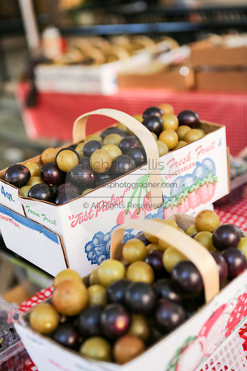 Locally grown muscadine grapes on display at the Farmers Market along Main Street in downtown Greenville, South Carolina.