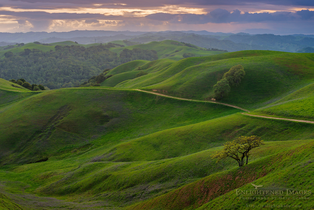 storm clouds roll over green hills in spring at sunset, Briones Regional Park, Contra Costa County, California