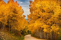 FALL- BUFFALO PASS- STEAMBOAT SPRINGS, COLORADO PHENOMENAL 2016 FALL- ROUTT COUNTY- BUFFALO PASS- STEAMBOAT SPRINGS, COLORADO