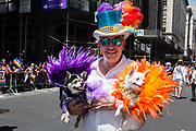 New York, NY - 30 June 2019. The New York City Heritage of Pride March filled Fifth Avenue for hours with participants from the LGBTQ community and it's supporters. A man in a brightly-colored top hat carries to small dogs in feathered costues.