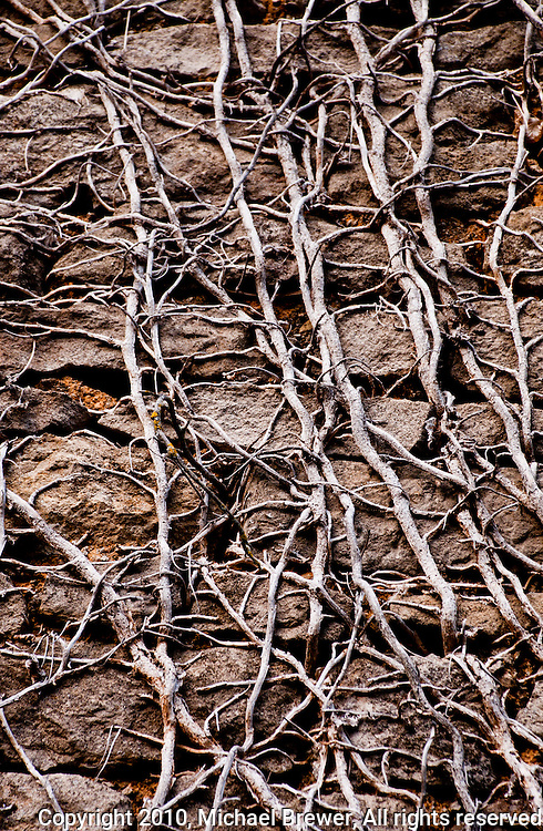 Vine branches on a stone wall texture.