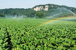 Irrigation des cultures de tabac dans la vallee de la Dordogne. L'eau est prelevee dans le fleuve...Irrigation of the cultures of tobacco in the valley of the Dordogne. Water is prelevee in the river.