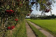Toegangspad naar Wijngaard De Frysling, Twijzel. De Frysling is de meest noordelijke wijngaard van Nederland, gelegen net buiten het dorp Twijzel, in de Friese gemeente Achtkarspelen. Hier, op de 53ste breedtegraad, in de buurt van de Waddenzee en in de beschutting van het prachtige Friese woudengebied, is er sinds 2009 een weelderige wijngaard ontstaan. Wat ooit een droom was voor Douwe en Jantiene Broersma, is op deze bijzondere plek met veel passie en re&euml;le ondernemerszin, gestalte gegeven.<br /> <br /> Road to vineyard De Frysling. De Frysling is the most northern vineyard in the Netherlands, located just outside the village Twijzel in the Frisian municipality Achtkarspelen. Here, on the 53rd latitude, near the Wadden Sea and in the shelter of the beautiful Frisian forest area, there is a lush vineyard emerged since 2009. What was once a dream for Douwe and Jantiene Broersma, is shaped in this special place with a lot of passion and real entrepreneurship.