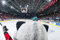 KELOWNA, CANADA - MARCH 16:  Rocky Raccoon, the mascot of the Kelowna Rockets enters the ice against the Vancouver Giants on March 16, 2019 at Prospera Place in Kelowna, British Columbia, Canada.  (Photo by Marissa Baecker/Shoot the Breeze)