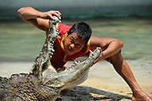 Crocodile Show in China