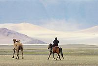 Mongolie. Province de Khovd. Troupeau de chameaux. population Kazak. // Mongolia. Khovd province. Camels. Kazak population.
