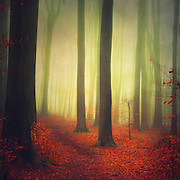 Abstract forest scenery - red foliage in a misty forest<br /> Prints &amp; more:<br /> https://society6.com/product/magic-woodland_print#1=45<br /> <br /> or here:<br /> http://www.redbubble.com/people/dyrkwyst/works/16431731-magic-woodland?ref=recent-owner