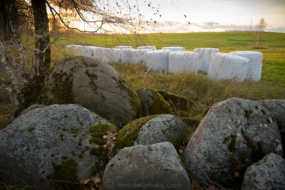 Hay bales wrapped in plastic near the village of Vecpiebalga, Latvia.