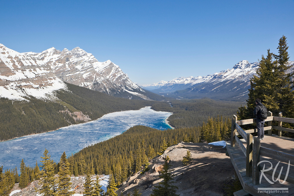 Hiker Enjoying Scenic View of Peyto Lake from Bow Summit, Banff National Park, Alberta, Canada
