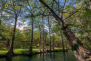 Rope Swing at the Blue Hole in Wimberley, Texas, USA