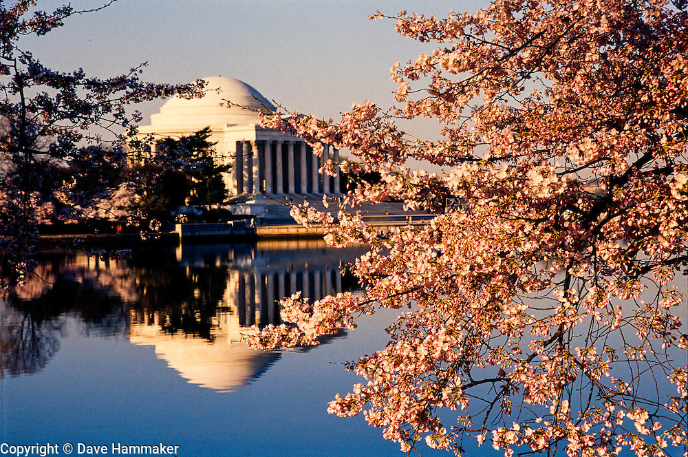 Cherry Blossoms at the Jefferson Memorial, Washington, DC