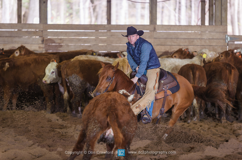 April 29 2017 - Minshall Farm Cutting 1, held at Minshall Farms, Hillsburgh Ontario. The event was put on by the Ontario Cutting Horse Association. Riding in the 25,000 Novice Horse Non-Pro Class is John Martin on Ray Too Smart owned by the rider.