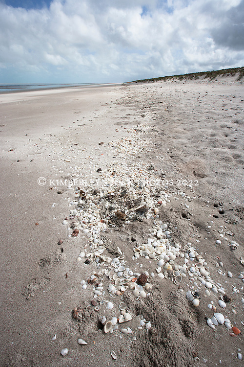 Shells washed up on Eighty Mile Beach