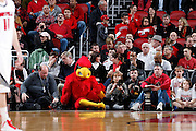 LOUISVILLE, KY - JANUARY 28: Louisville Cardinals mascot joins the row of photographers during the game against the Pittsburgh Panthers at KFC Yum! Center on January 28, 2013 in Louisville, Kentucky. Louisville defeated Pitt 64-61. (Photo by Joe Robbins)